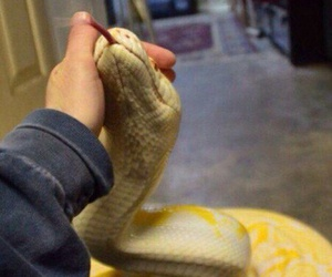 snake and hands image