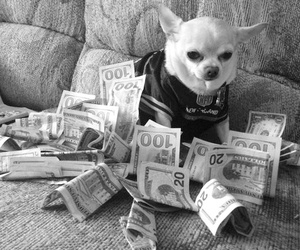 dog, money, and meme image