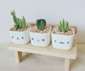 cactus, plant, and cute image