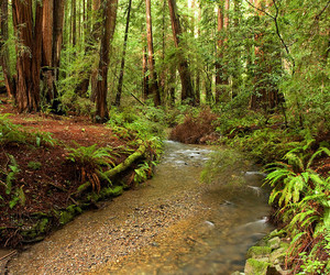 california, forest, and creek image