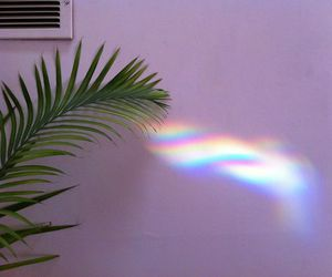 rainbow, plants, and grunge image