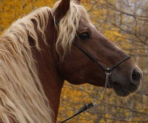 horse, blonde, and brown image