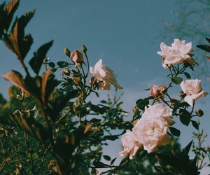 flowers, rose, and aesthetic image