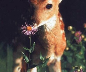deer, animal, and flowers image