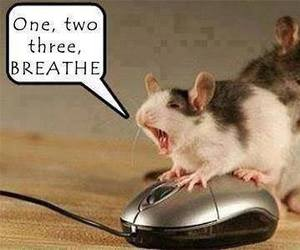 mouse, funny, and lol image