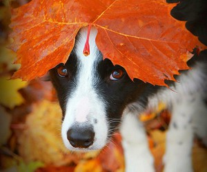 adorable, puppy, and autumn image