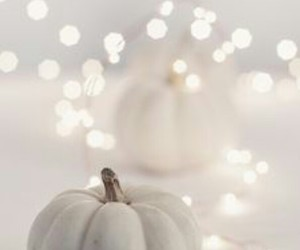 white, pumpkin, and light image