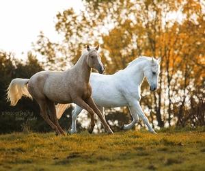 horses image
