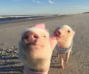 pig, beach, and animal image