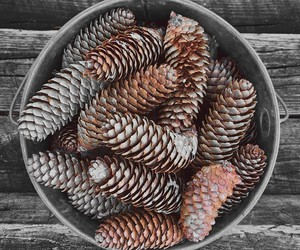 autumn and pinecones image