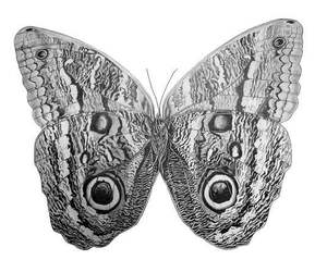 animal, butterfly, and eyes image