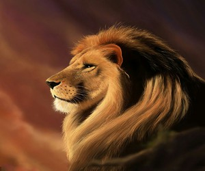 animals, cute, and lion image