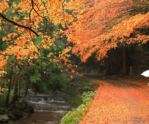 autumn, japan, and old couple image