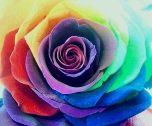 art, colours, and rose image