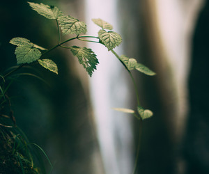 forest, fresh, and leaves image