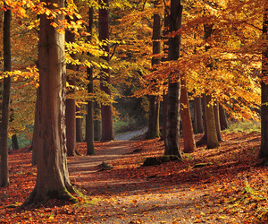 autumn, october, and england image