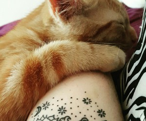 animals, cat, and tattoo image