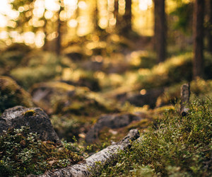 bokeh, forest, and orange image