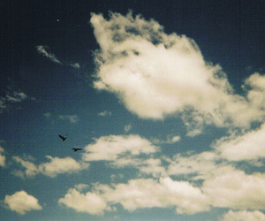 bird, sky, and clouds image