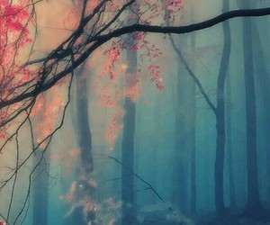 wallpaper, forest, and nature image