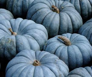 pumpkin, blue, and autumn image