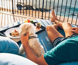 beach, Caribbean, and dog image