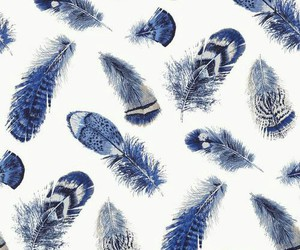 blue, feather, and wallpaper image