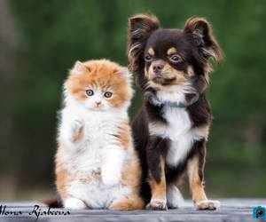 baby animals, puppy, and cats image