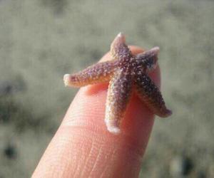 beach, starfish, and seastar image