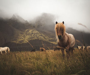 icelandichorses, #world, and #icelandic image