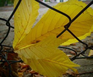 autumn, fallenleaves, and leaves image