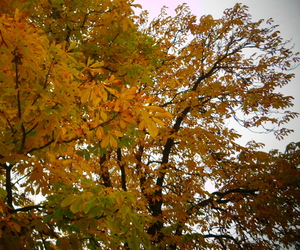autumn, chestnuts, and fallenleaves image