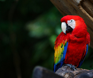 wildlife and macaws image