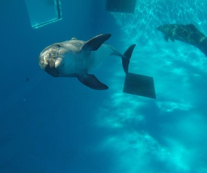 animals, blue, and dolphin image