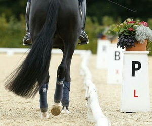 dressage and horse image