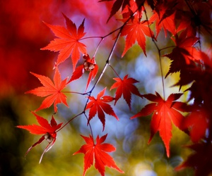 automne feuille rouge image