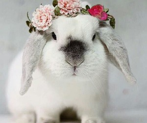 flowers, rabbit, and cute image