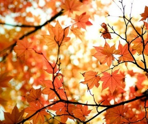 autumn, fall, and girly image