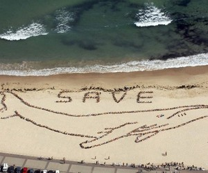 save the whales image