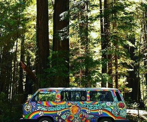nature, forest, and hippie image