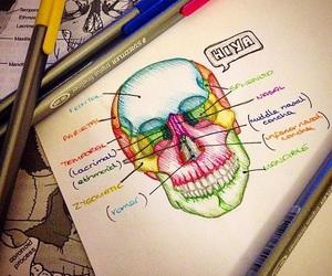 med, medicine, and school image