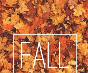 fall, orange, and love image