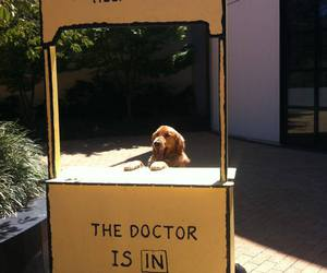 dog, funny, and doctor image