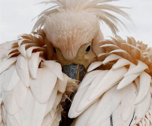 animal, feathers, and cute image