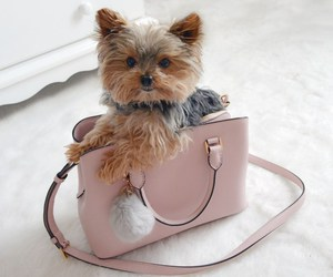 dogs, fashion, and luxury image