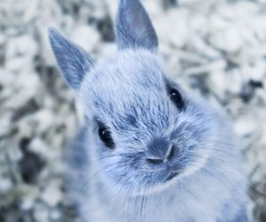 lovely, rabbit, and cute image