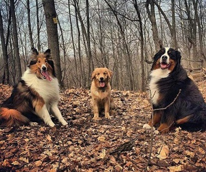 animal, fall, and puppy image