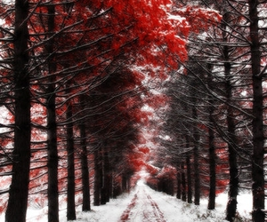 red, snow, and forest image