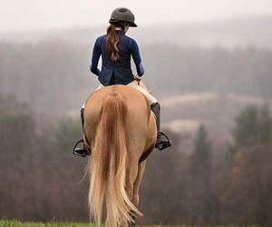 horse, animals, and ride image