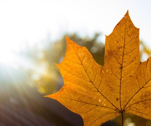 autum, sunshine, and Herbst image